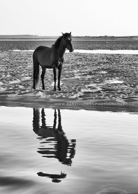 karen gowen photography the wild horses of beaufort nc